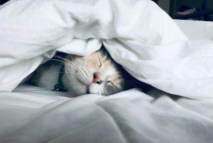 減肥靠激素,激素靠睡眠。